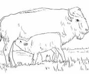 Coloring pages Buffalo calf with its mother