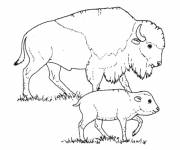 Free coloring and drawings Buffalo Cow and her baby Coloring page