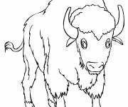 Coloring pages Color bison