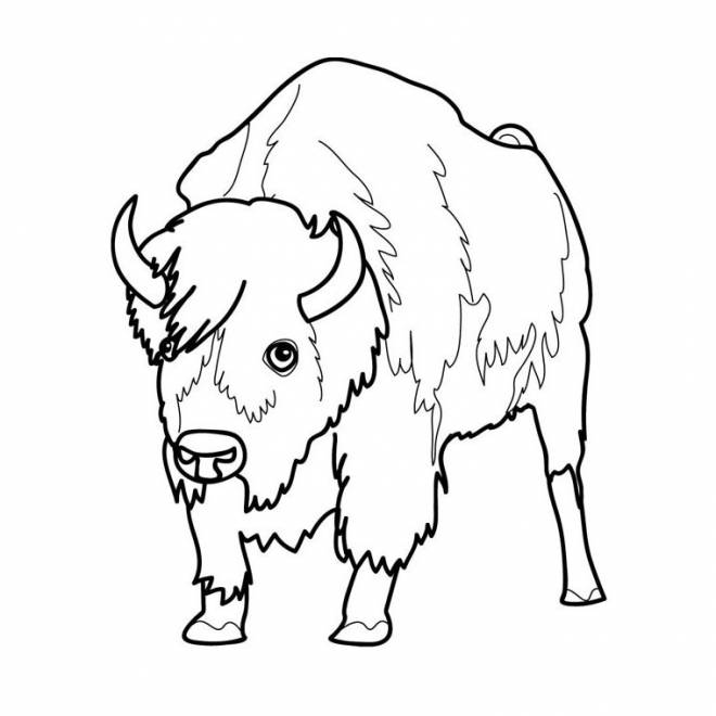 Free coloring and drawings Easy American bison Coloring page