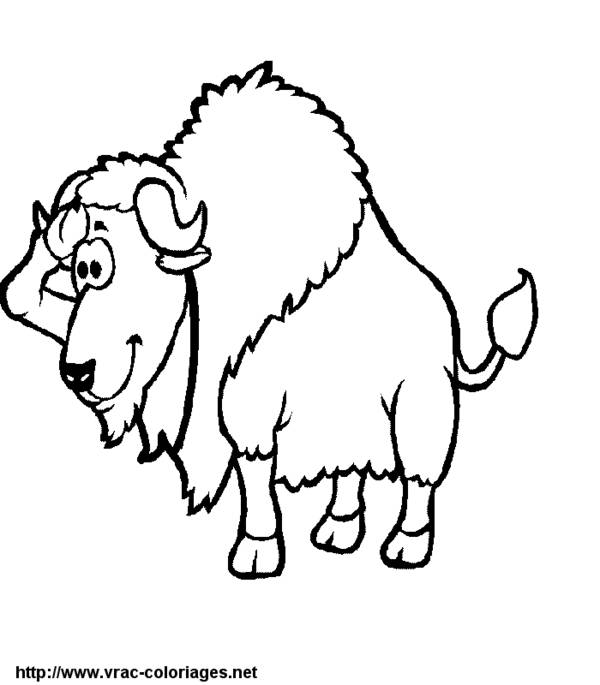 Free coloring and drawings Funny bison Coloring page