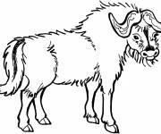 Coloring pages Vector image of a Bison