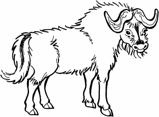 Free coloring and drawings Vector image of a Bison Coloring page
