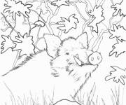 Free coloring and drawings Boar to download Coloring page