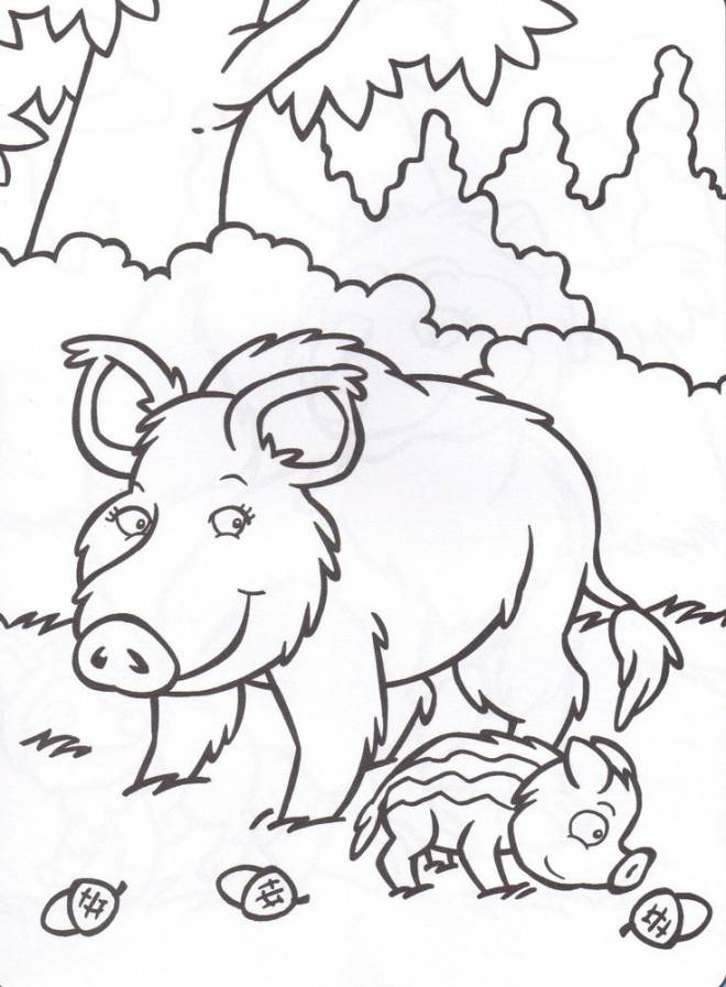 Free coloring and drawings Boar to draw Coloring page