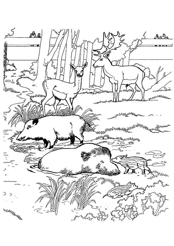 Free coloring and drawings Boar to print Coloring page