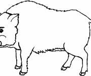 Free coloring and drawings Boar to print for free Coloring page