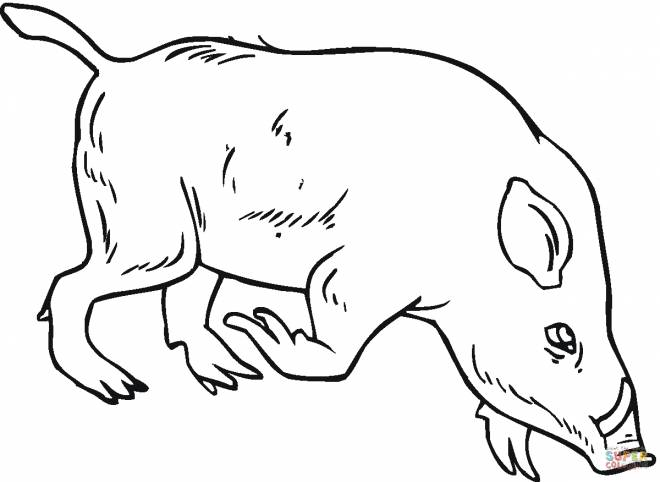 Free coloring and drawings Cute boar  Coloring page