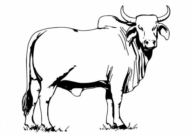 Free coloring and drawings A Camargue bull in color Coloring page