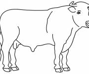 Coloring pages Bull in color