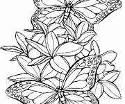 Free coloring and drawings Butterflies in flight Coloring page
