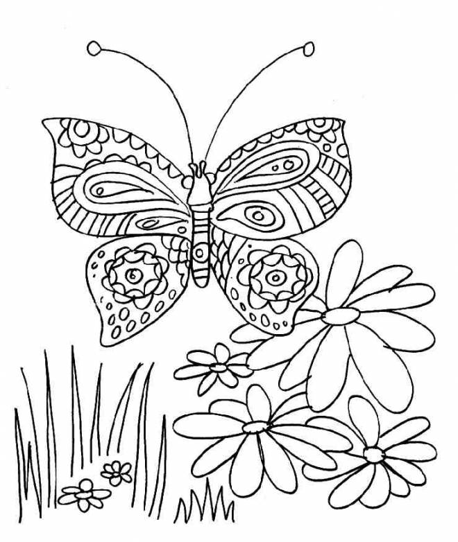 Free coloring and drawings Butterfly and flower Coloring page