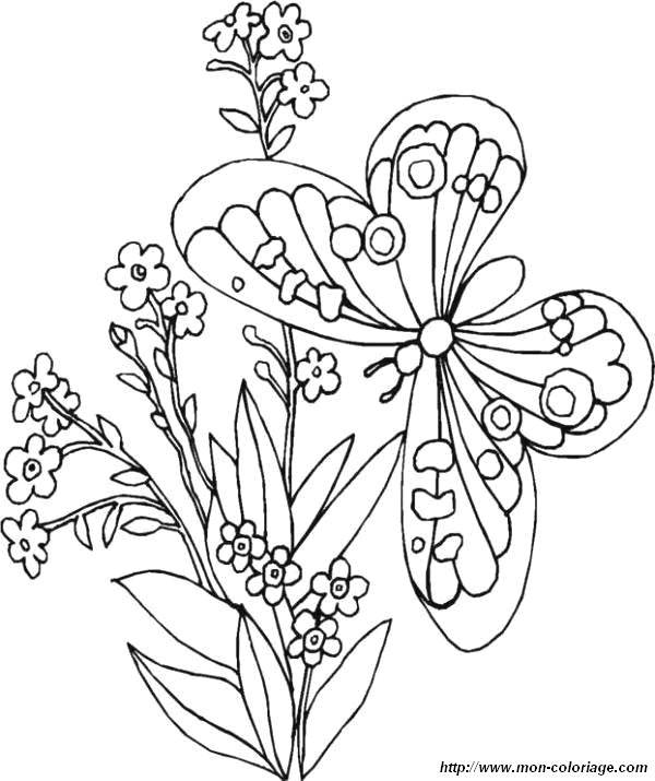 Free coloring and drawings Butterfly in nature Coloring page