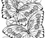 Free coloring and drawings Color butterfly Coloring page