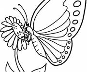 Free coloring and drawings Coloring butterfly Coloring page