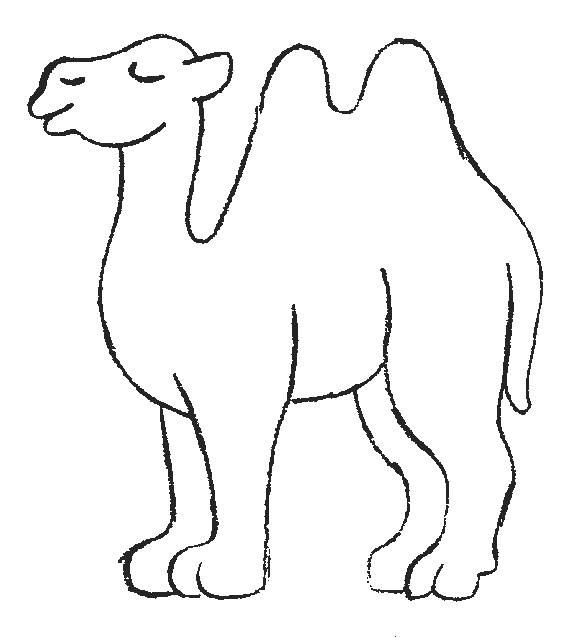 Free coloring and drawings 2-humped camel Coloring page