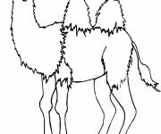 Free coloring and drawings Camel looking at you Coloring page