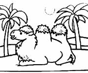 Free coloring and drawings Desert camel Coloring page