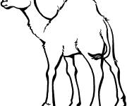 Free coloring and drawings Easy camel Coloring page