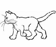 Free coloring and drawings Colored cat Coloring page