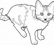 Free coloring and drawings Drawing of a Cat Coloring page