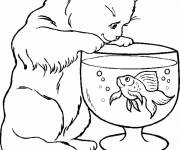 Free coloring and drawings The cat and the fish Coloring page