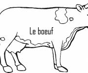 Coloring pages Beef color