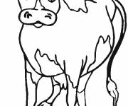Coloring pages Beef in color