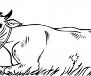 Coloring pages Beef in the field