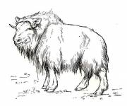 Free coloring and drawings Steppe bison Coloring page
