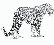 Coloring pages African cheetah