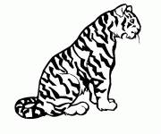 Coloring pages Cheetah for child