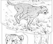 Coloring pages Cheetah in the Savannah
