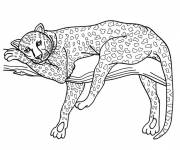 Coloring pages Cheetah is resting