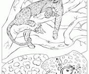 Coloring pages Cheetah on the tree