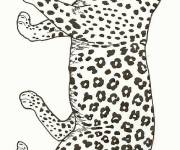 Coloring pages Cheetah opening its mouth