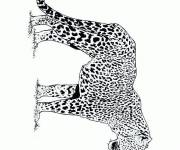 Coloring pages Cheetah outdoors