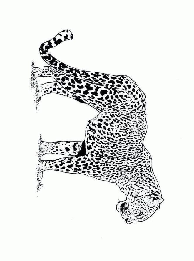 Free coloring and drawings Cheetah outdoors Coloring page