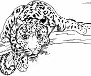 Coloring pages Cheetah watching you