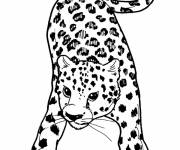 Coloring pages Cheetah with attentive gaze