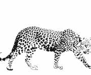 Coloring pages Realistic cheetah