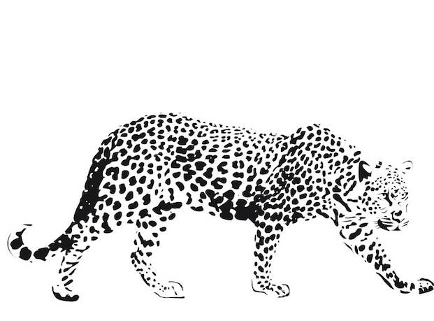 Free coloring and drawings Realistic cheetah Coloring page