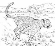 Coloring pages Running cheetah