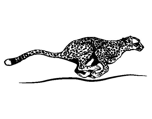 Free coloring and drawings Very fast cheetah Coloring page