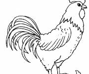 Coloring pages Rooster 3
