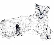 Free coloring and drawings Colored cougars Coloring page