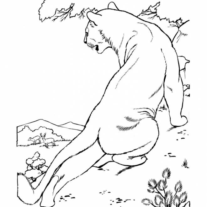 Free coloring and drawings Cougars look at the gazelles Coloring page