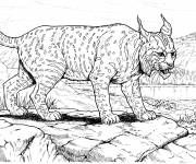 Free coloring and drawings Cougars near a river Coloring page