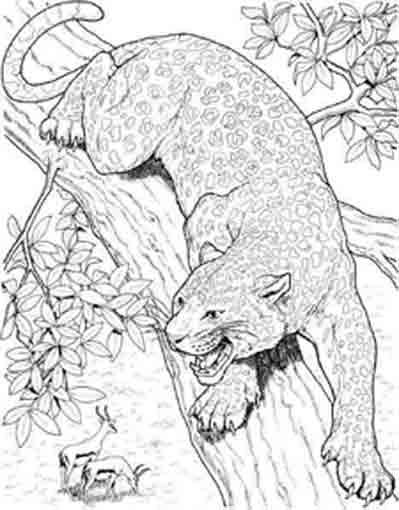 Free coloring and drawings Cougars on the tree Coloring page