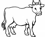 Free coloring and drawings a cow Coloring page